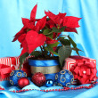 Beautiful poinsettia with christmas balls and presents on blue fabric background — Stock Photo #16306181