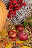Doskonałe jesień martwa natura z dyni na drewnianym stole na drewniane tło zbliżenie — Zdjęcie stockowe