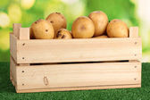 Ripe potatoes in wooden box on grass on natural background — Stock Photo