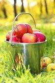 Secchio di mele mature fresche nel giardino sull'erba verde — Foto Stock