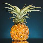 Ripe pineapple on dark blue background — Stock Photo