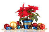 Beautiful poinsettia with christmas balls isolated on white — Photo