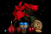 Beautiful poinsettia with christmas balls on Christmas lights background — Stock Photo