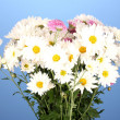 Bouquet of daisies on the color background - Stock Photo