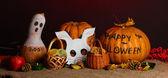 Truco o trato máscaras de halloween y baldes llenaron de galletas sobre fondo de color — Foto de Stock