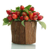 Ripe hip roses with leaves in wooden vase, isolated on white — Stock Photo