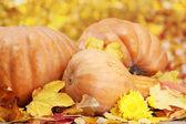 Citrouilles et automne feuilles, sur fond jaune — Photo