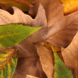 Composition from yellow autumn leaves background - Stock Photo