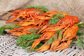 Tasty boiled crayfishes with fennel on table on sackcloth background — Stock Photo