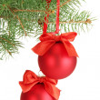 Christmas balls on fir tree, isolated on white - 