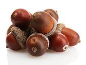 Ghiande marrone, isolati su bianco — Foto Stock