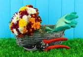 Secateurs with flowers in basket on wooden background — Stock Photo