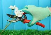 Gartenschere mit Blumen am Zaun-Hintergrund — Stockfoto