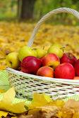 Basket of fresh ripe apples in garden on autumn leaves — Stock Photo