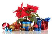 Poinsettia bonita com bolas de natal e presentes isolados no branco — Fotografia Stock