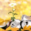 Garbage with growing flower. Environmental conservation concept — Stock Photo #16804081
