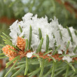 Fir tree branch with snow, close up — Stock Photo #16839343