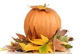 Ripe orange pumpkin yellow autumn leaves isolated on white — Stock Photo