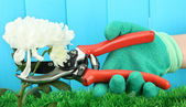 Secateurs with flower on fence background — Stock Photo