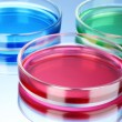 Royalty-Free Stock Photo: Color liquid in petri dishes on blue background