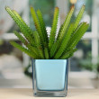 Cactus in vase on windowsill — Stock Photo #16866867