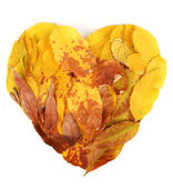 Bright autumn leaves lie in shape of heart isolated on white — Foto de Stock