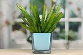 Cactus in vase on windowsill — Stock Photo