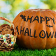 Halloween pumpkin on grass on bright background - Stockfoto