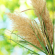 Reeds on green background — Stock Photo #16872927