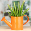 Cactus in watering con windowsill — Stock Photo #16875107