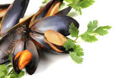Mussels in shell with fresh herbs isolated on white — Stock Photo