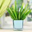 Cactus in vase on windowsill — Stock Photo #16931279