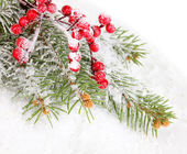 Rowan berries with spruce covered with snow — Stock Photo