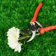 Secateurs with flower on green grass background — Zdjęcie stockowe