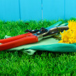 Secateurs with flower on grass on fence background — Stockfoto