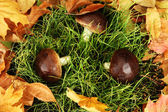 Mushrooms on grass background — Stock Photo