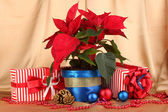 Beautiful poinsettia with christmas balls and presents on gold fabric background — Photo
