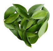 Herzen der wunderschönen grünen blättern, isoliert auf weiss — Stockfoto