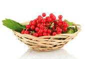Ripe viburnum in a wicker basket isolated on white — Stock Photo