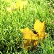 Beautiful autumn maple leaf on green grass, close up — Stock Photo #17183045