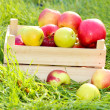 Stock Photo: Crate of fresh ripe apples in garden on green grass