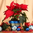 Beautiful poinsettia with christmas balls on gold fabric background — Foto de Stock
