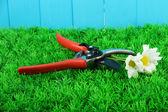 Zahradnické nůžky s květem na trávě na plot pozadí — Stock fotografie