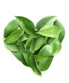 Heart of beautiful green leaves, isolated on white — Stock Photo