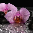 Spa stones and orchid flower, on wet grey background — Stock Photo