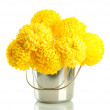 Bright yellow chrysanthemums in metal bucket, isolated on white — Стоковая фотография