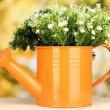 Decorative flowers in watering can on bright background — Stock Photo #17213921