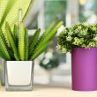 Decorative flowers in vases on windowsill — Stock Photo #17213931