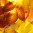 Bright autumn leaves, close up — Stock Photo #17384593