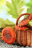 Red amanitas in basket, on green background — Stock Photo